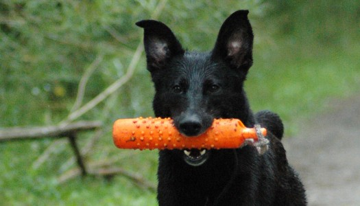 5 Innovative Toys Your Dog Needs to Try
