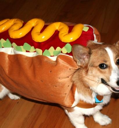 Corgi as Hotdog for Halloween Costume