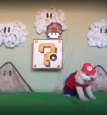 Hilarious Super Mario Dog Video
