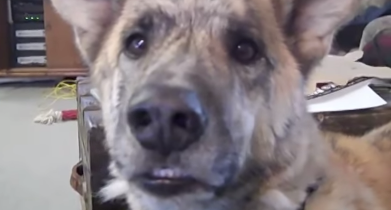 The Ultimate Dog Tease Video