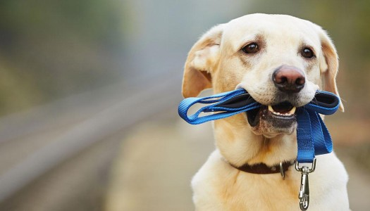 Dog Leash or Harness – That is the Question!