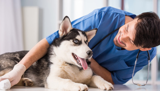 5 Steps to Choosing a Vet for Your Dog