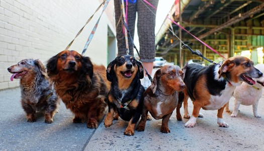 The Story of My 12 Wiener Dogs