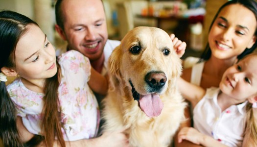 7 Easy Ways to Spoil Your Beloved Dog
