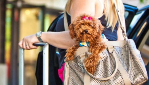 Proven Tips for Peaceful Car Travel with Your Dog