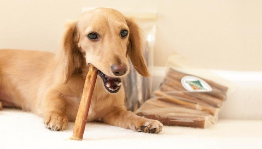 The Benefits of Bully Sticks for Dogs
