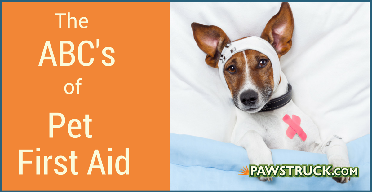 Abcs Of Dog First Aid Pet Safety Training Pawstruck