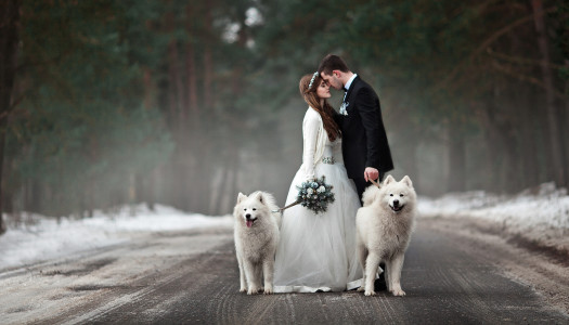 5 Stress-Free Ways to Easily Include Your Dog in Your Wedding