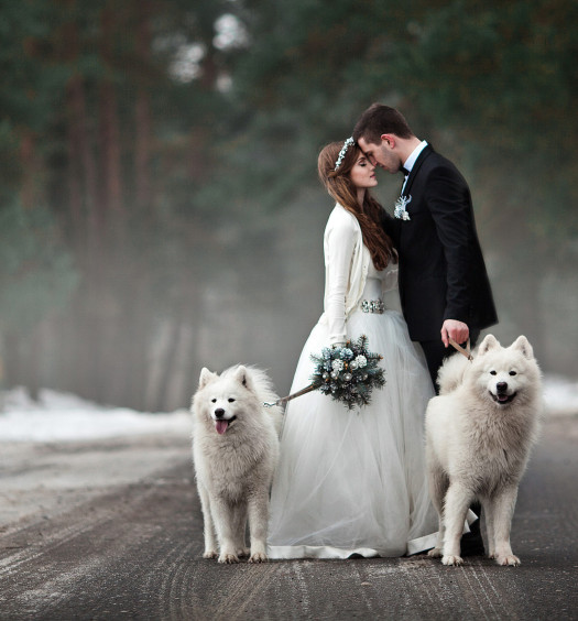 How to Include Dogs in Your Wedding