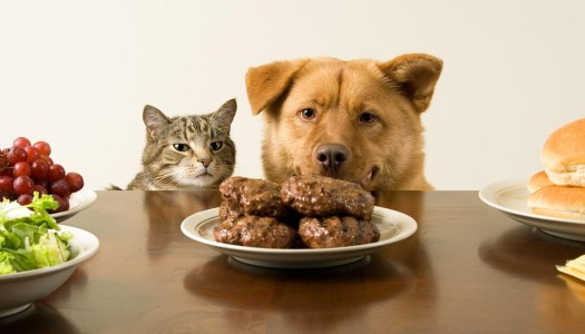 Is it Safe to Give My Dog Table Scraps?