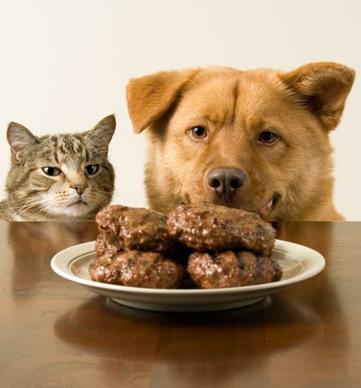 Dog and Cat eating table scraps