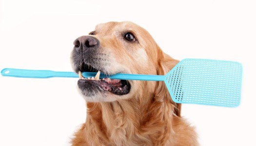 Important Pest Control Tips for Dog Owners