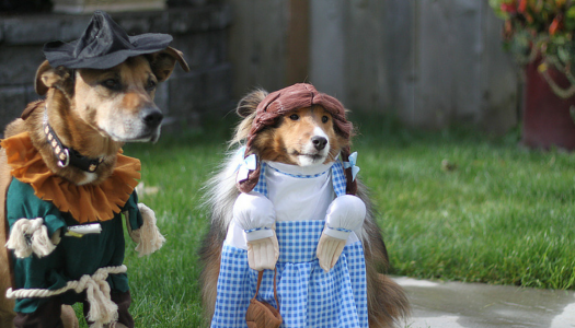 10 Dogs That'll Give You Ultimate Halloween Costume Goals
