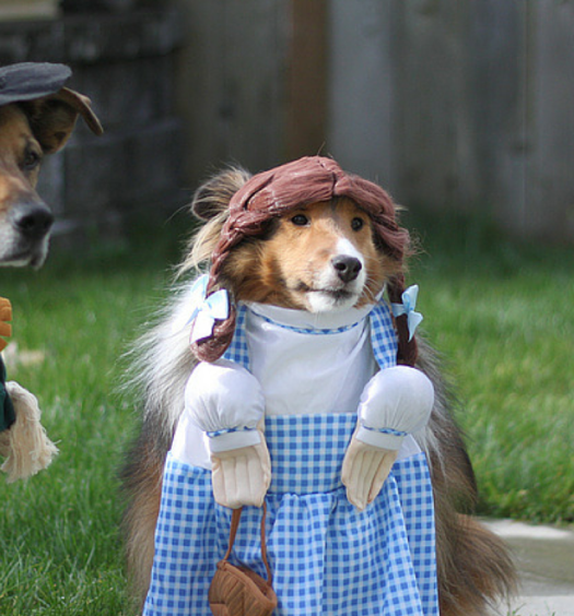 Click here to see Pawstruck's list of Ultimate Dog Costumes!