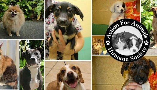 Rescue Spotlight: Action For Animals Humane Society