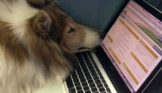 Moving With A Dog: How To Create A Pet Resume
