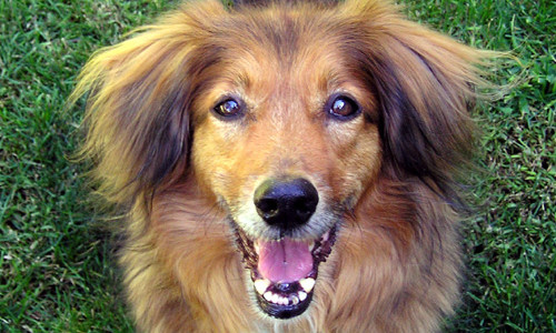 5 Tips Any Dog Can Follow To Stay Healthy