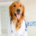 Dr. Lily Canis