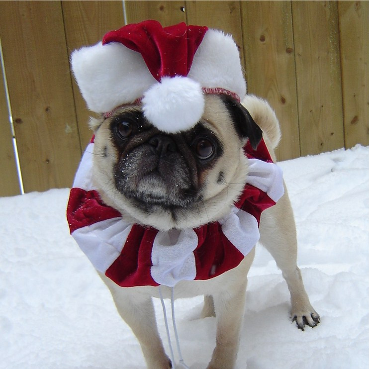 Click here to read Pawstruck's own Dr. Lily Canis explain how to survive the holiday season.