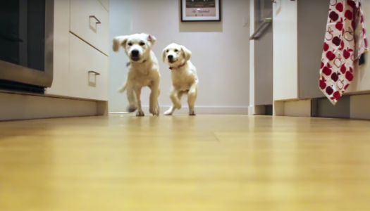 Dinner Run – Puppy Time Lapse Video