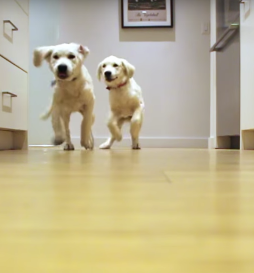 Click here to see an adorable 9 month puppy time lapse video of their daily dinner run!