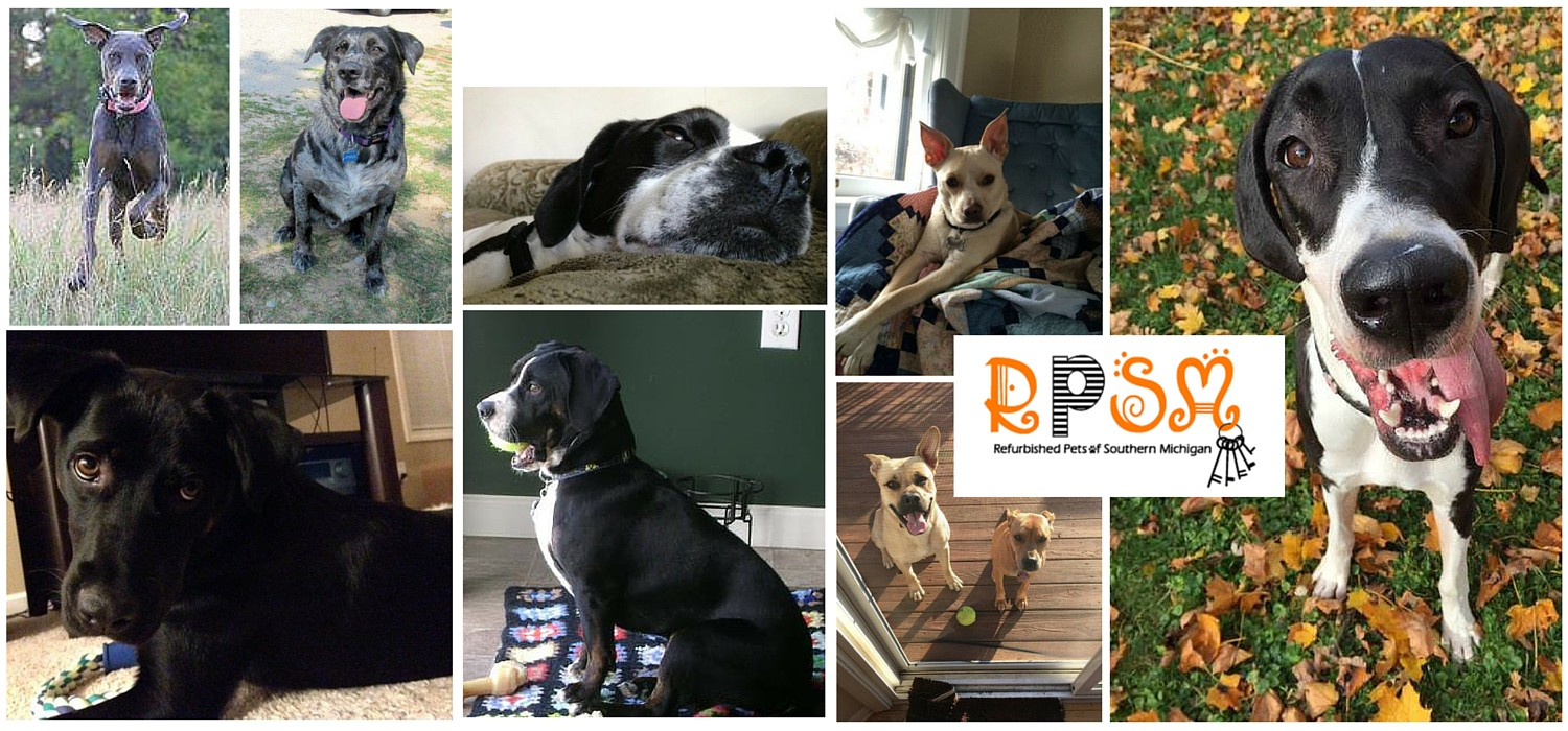 Click here to see Pawstruck's Rescue Spotlight: Refurbished Pets of Southern Michigan.