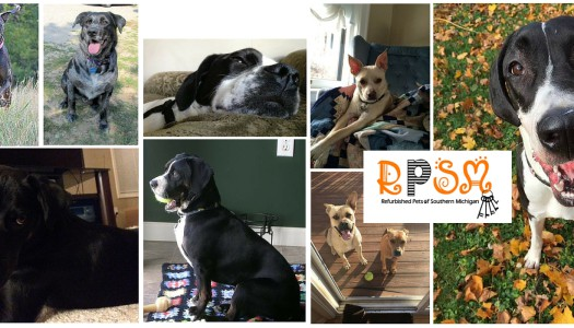 Rescue Spotlight: Refurbished Pets of Southern Michigan