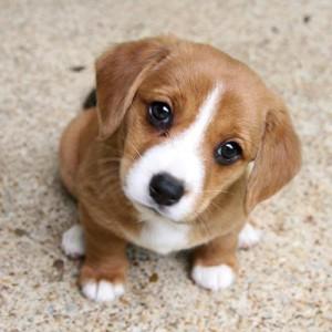 Puppy wants strawberries