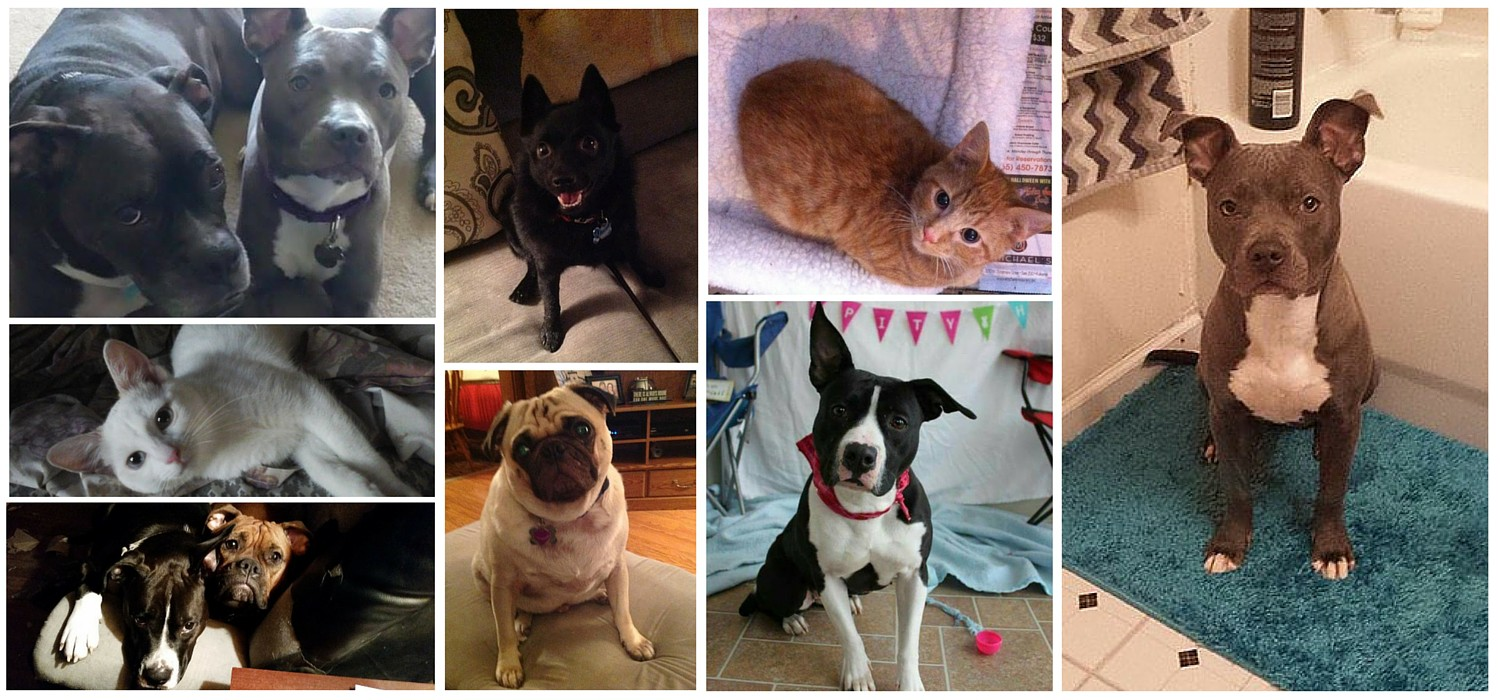 Click here to see Pawsitively 4 Paws' Rescue Spotlight!