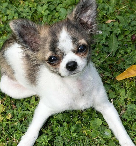 Click here to see 10 of the cutest small dog breeds!