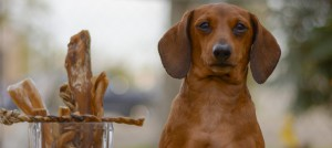 Dachshunds - Dog Breed List