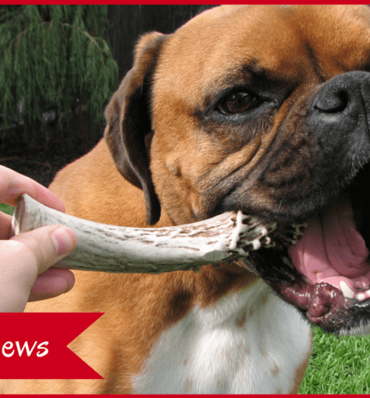The Benefits of Antlers for Dogs
