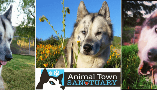 Rescue Spotlight: Animal Town Sanctuary Inc.