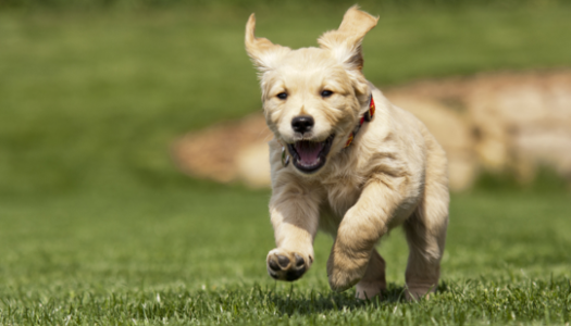 The Top 10 Cutest Puppy Breeds
