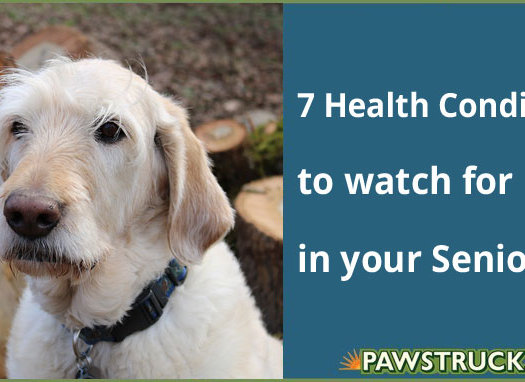 7 Health Conditions to watch for in your Senior Dog
