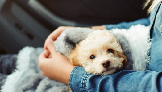 7 Incredible Ways Pets Can Help Calm Anxiety