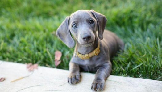 Top 10 Mixed Breed Dogs