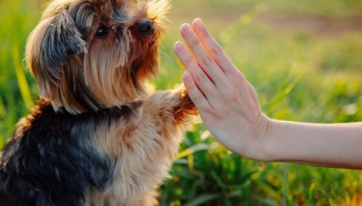 The Most Common Dog Training Mistakes Pet Owners Make