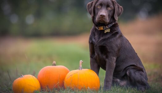 The Ultimate Guide to Halloween for Dogs and Cats