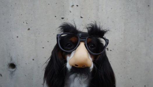 10 Most Popular Pet Costumes