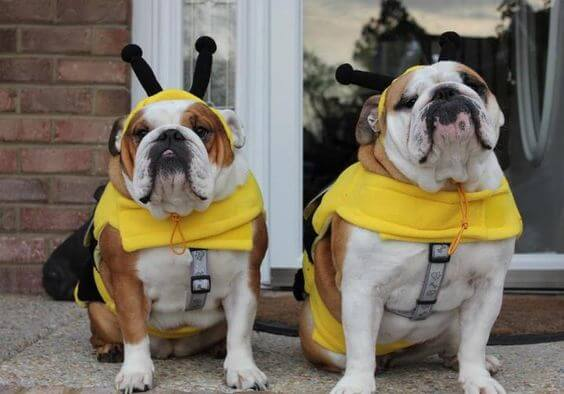 bumblebee costume for dogs