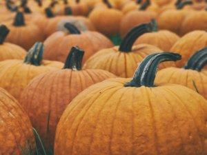 pumpkin for pets