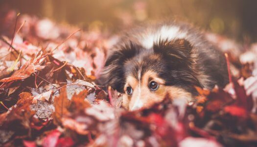 A Dog Owners Guide to the Fall Months