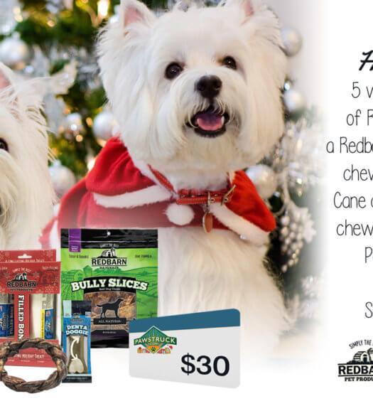 Dog Holiday Giveaway