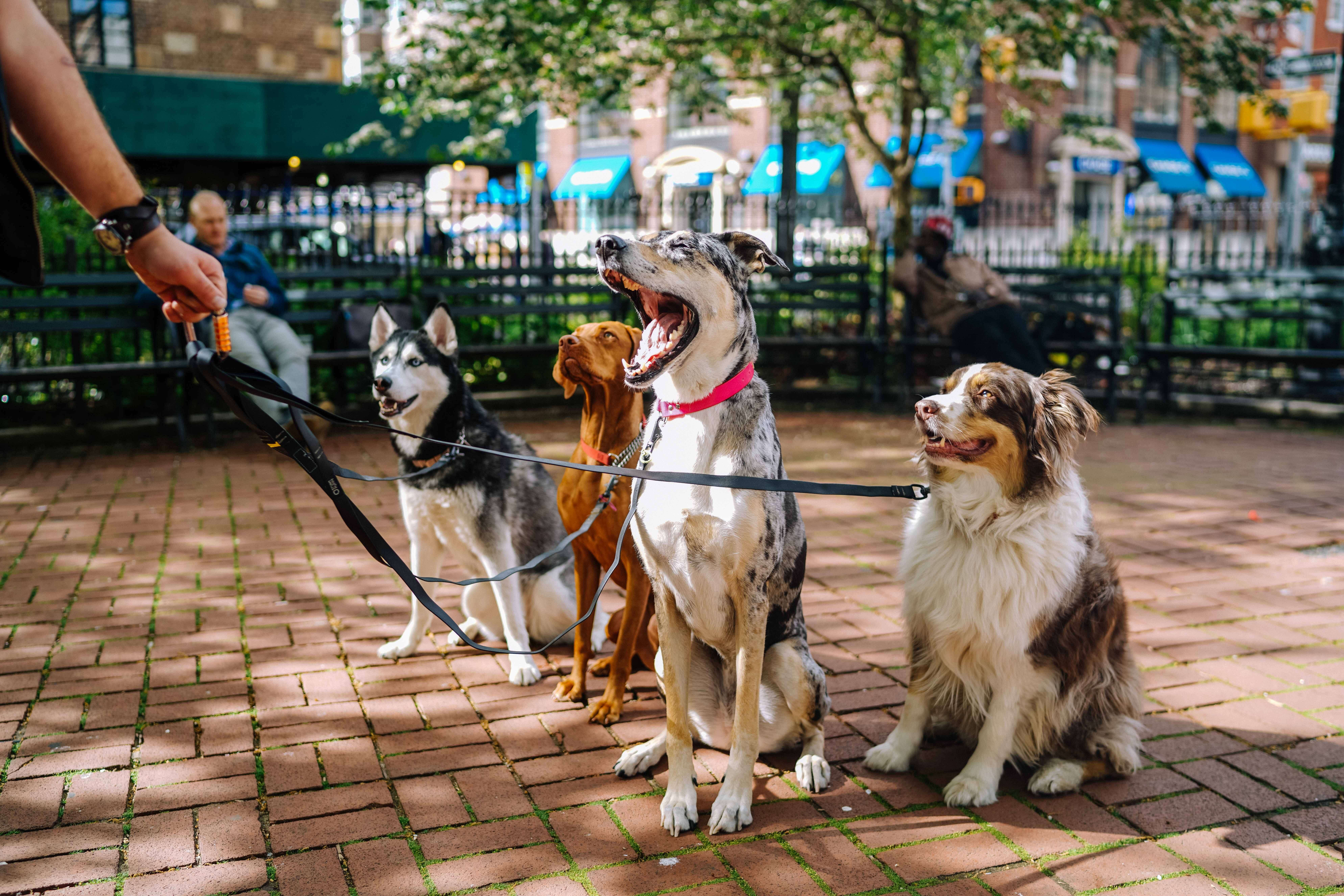 Top 10 Cutest Large Dog Breeds