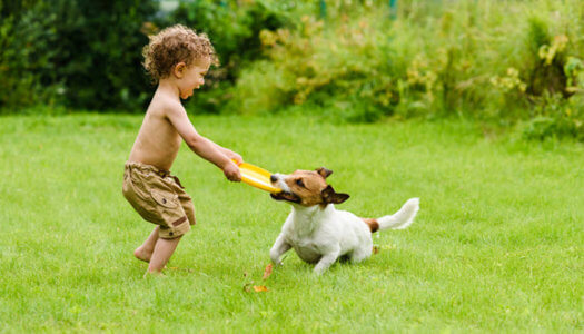 10 Outdoor Activities To Do With Your Dog
