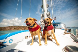 Activities to do with your dog: sailing