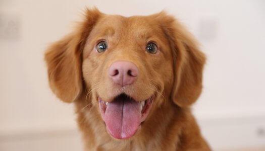 5 Feeding Tips for Raising Happy, Healthy Puppies