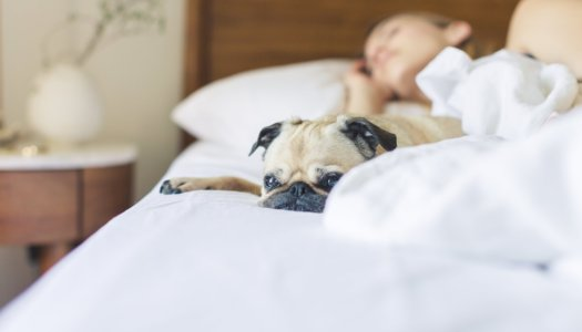 Enjoy the Benefits of Sleeping with Your Pet
