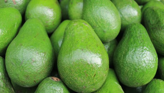 Getting Smart With Feeding Avocados To Your Dogs